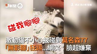 激動貓不小心被碰到莫名森77 「無影腳」狂踢...網笑:臉超嫌棄