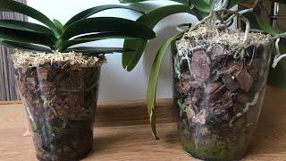 Полив орхидей в ЗАКРЫТОЙ СИСТЕМЕ! Как и когда!? Нюансы полива!