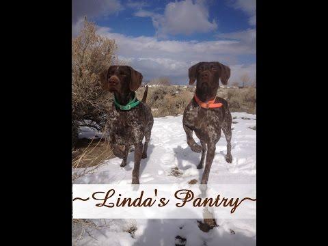 ~Six Week Old German Shorthair Puppy Update With Linda's Pantry~