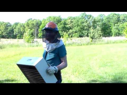New Bee Adventure Video With Essential Soap Kimberly Mcnutt