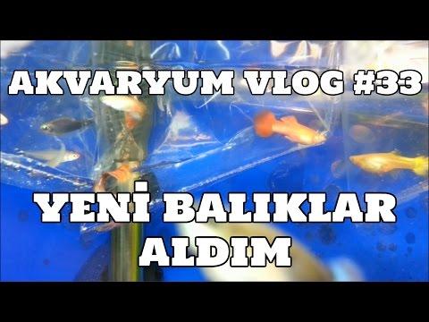 Hobihanem - Akvaryum Vlog #33 (Yeni Balıklar Aldım) [08.03.2017]