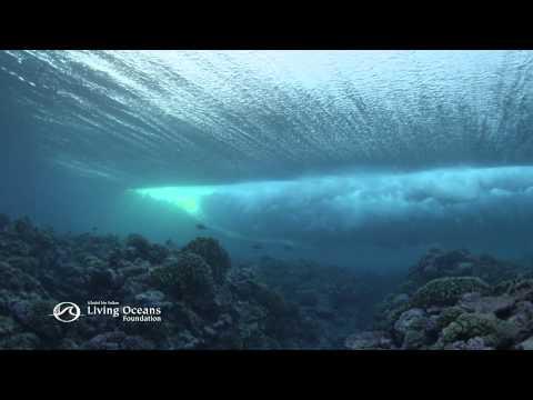 Ocean Alert: Overfishing