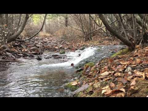 (HD) Mountain Stream Nature Video - Deep Creek Waterfall (1 Hour)