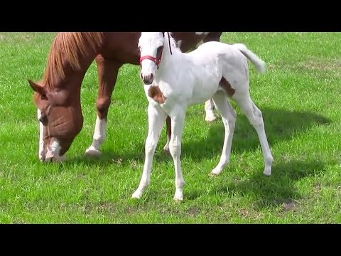 After This Ba Horse Was Born, Her Owners Took One Look And Realized How Incredibly Rare She Is