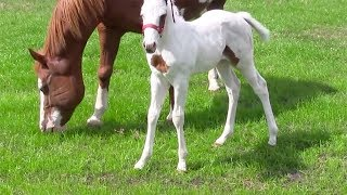 After This Baby Horse Was Born, Her Owners Took One Look And Realized How Incredibly Rare She Is