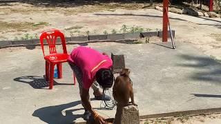 Жизнь на острове Самуи. Шоу обезьян. Шоу слонов. Треккинг на слонах.