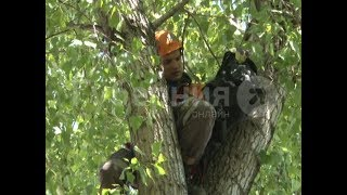 Спасатели сняли кота с дерева в Хабаровском районе. MestoproTV