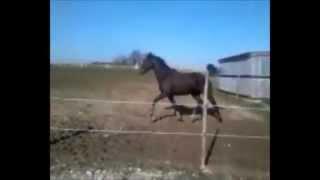 Cheval un peu fou :)