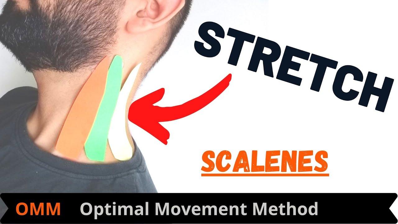 Download Neck Stretches | Scalene Stretch