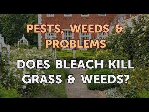 Does Bleach Kill Grass & Weeds?