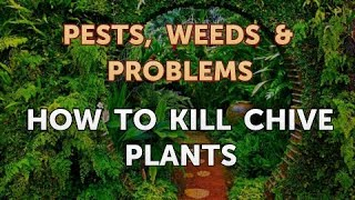 How to Kill Chive Plants