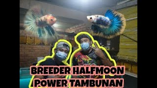 BREEDER HALFMOON POWER FNF TAMBUNAN || BROTHER VIN