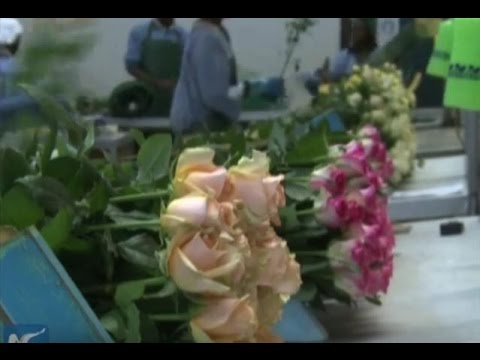 Kenya exploits flower market in China