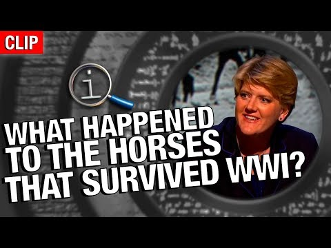 QI | What Happened To The Horses That Survived WW1?