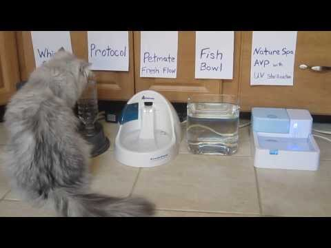 Persian Cat Water Bowl Testing-  review / documentary
