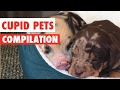 Cupid Pets Video Compilation 2017