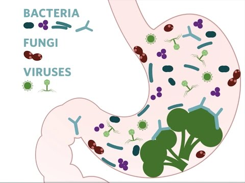 What's Up With Your Gut Microbiome? | California Academy of Sciences