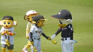 阪神タイガース2018/トラッキー&マーくん「ドリルせんのかい」からの…(2018.06.09)