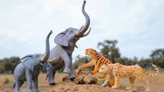 Animals for Kids to Learn   Leopard tigers attack ,Trailer truck Helicopter Transport Elephant