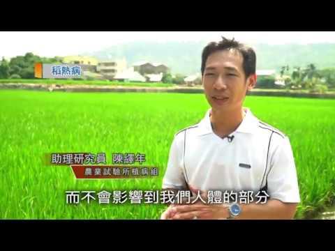 水稻防疫|常見病害篇