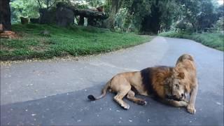 Road Trip to Taman Safari Indonesia bogor