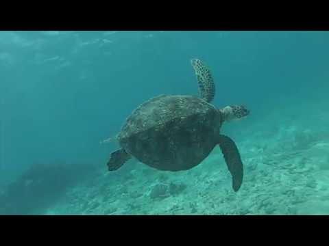 Coral Sea 2016