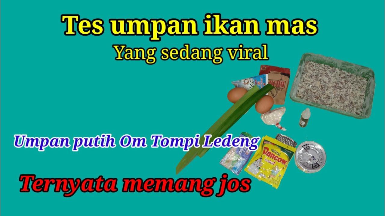 Download Tes umpan putih ikan mas yang sedang viral, umpan om Tompi Ledeng