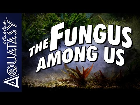 Aquatasy - The Fungus Among Us - What To Do If You Have White Fungus Growing On Your Aquarium Wood
