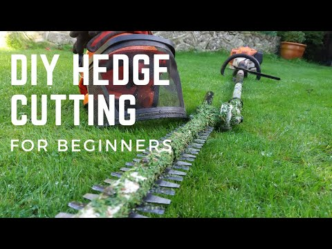 HOW to cut trim a HEDGE : Beginners DIY Guide to trimming / cutting a hedge #stihl