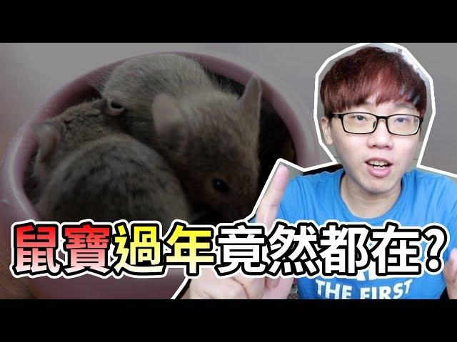 【維鼠日記】鼠寶寶過年都在做什麼?!【維特】#08