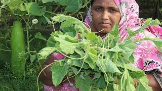 Lau shak and Chapa Sutki Recipe Village Style Farm Fresh Bottle Gourd Leaf Curry Village Food