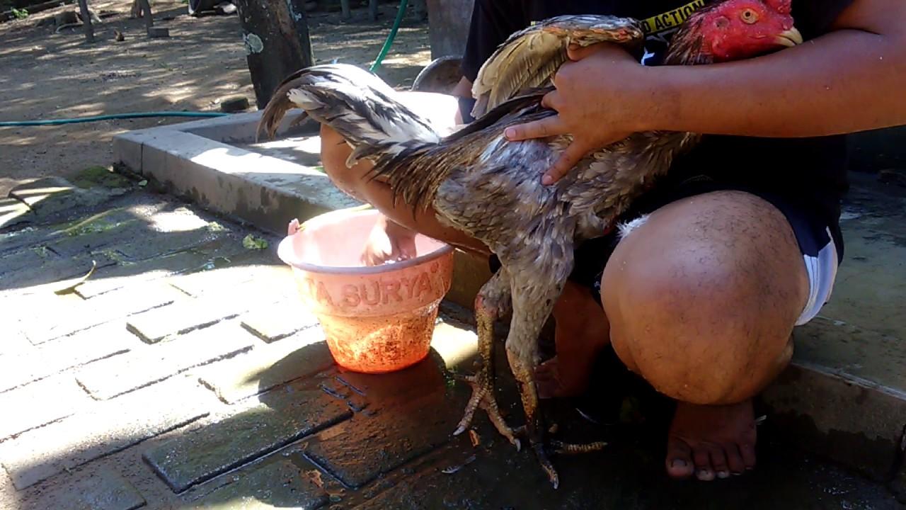Cara Mengobati Kurap Ayam Dengan Kunyit - Dunia Herbal