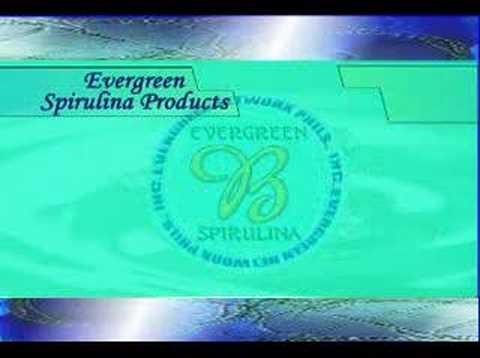 evergreen spirulina products