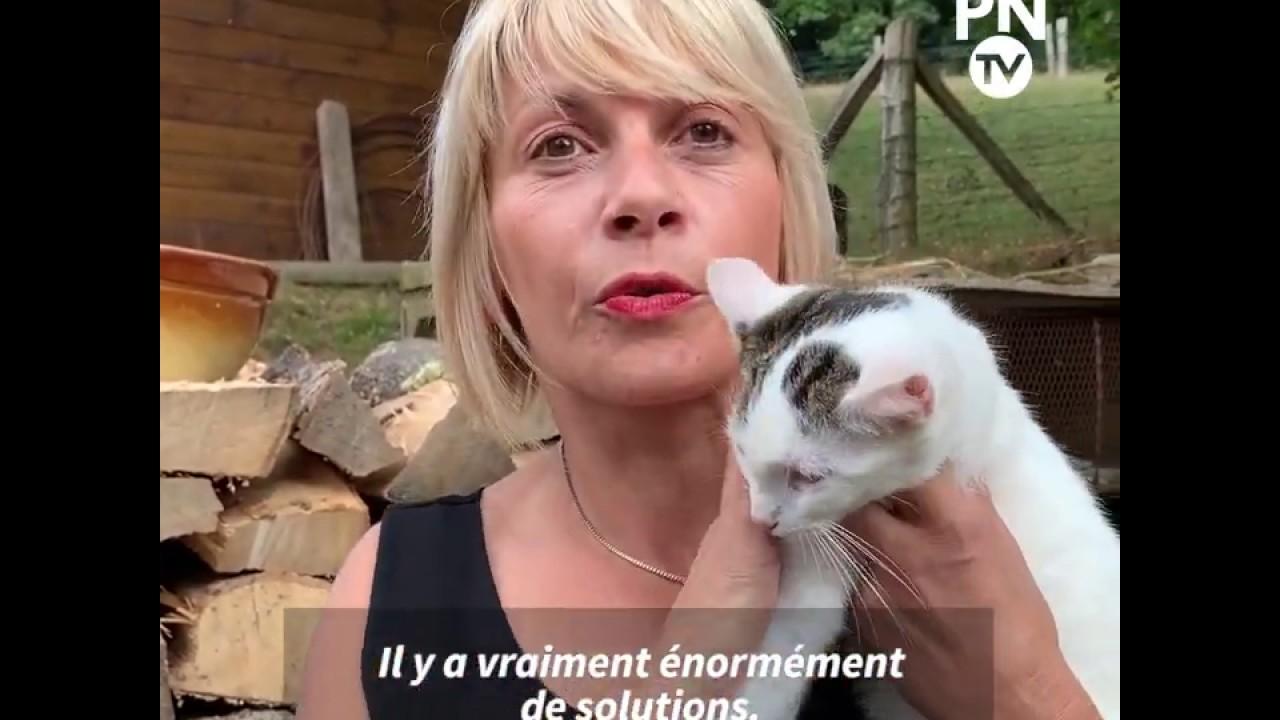 Abandon D Animaux Des Chatons Affames Jetes Dans Un Jardin De Seine Maritime Societe Paris Normandie