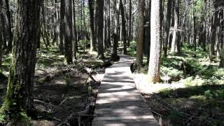Hiking Trails of Nova Scotia - Kejimkujik National Park: Hemlock and Hardwoods
