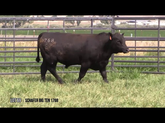 Mid Valley Bull Sale Lot 69