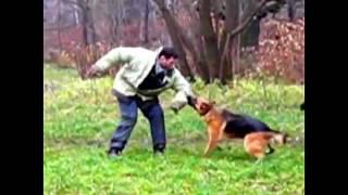 Немецкая овчарка защита хозяина(, 2016-05-28T13:19:44.000Z)