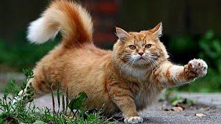 Южный Крым. Забавные кошки Харакского парка