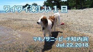 この時季、犬友さん達と琵琶湖に集合!今年は日程が合わなかったり、愛...