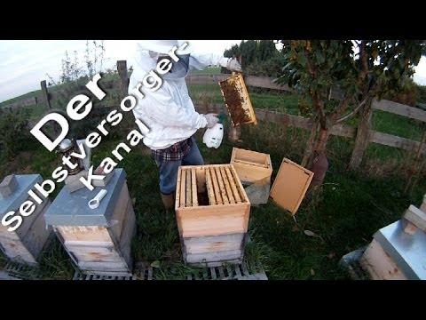 Bienen Notbehandlung mit Milchsäure