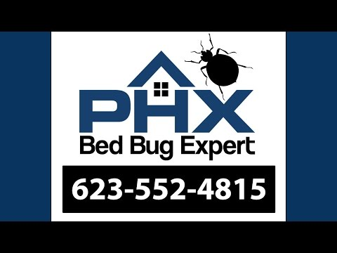 Cave Creek AZ Bed Bug Exterminator - 623-552-4815 | Bed Bug Treatment
