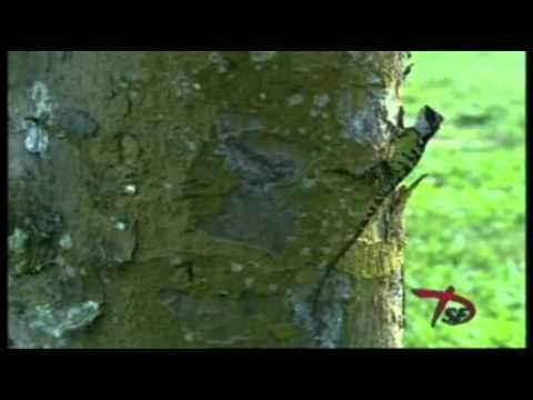 Giới thiệu về rừng quốc gia cúc phương 01