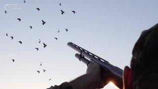 CACCIA al COLOMBACCIO - il PASSO di OTTOBRE - Wood Pigeon Hunting