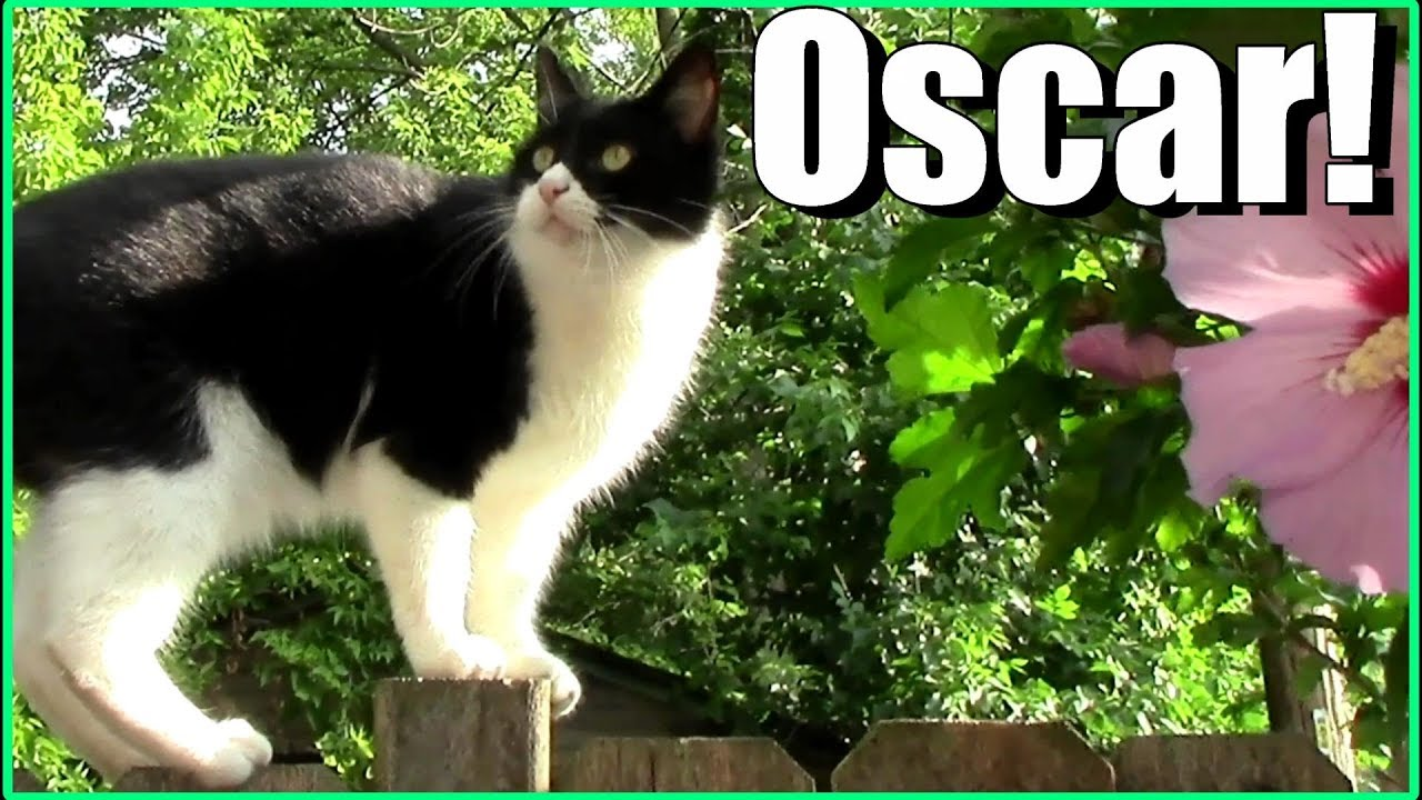 The Best Of Oscar The Garden Cat (2017): Cute, Funny Cat