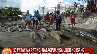 UB: 50 patay na pating, natagpuan sa loob ng isang Vietnamese fishing vessel sa Palawan