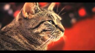 Collective Soul Cat (улучшенный звук)