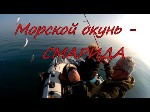 Морской окунь - смарида.  Заозерное  27 октября 2019