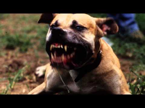 Bad Dog Barking - Ringtone MP3