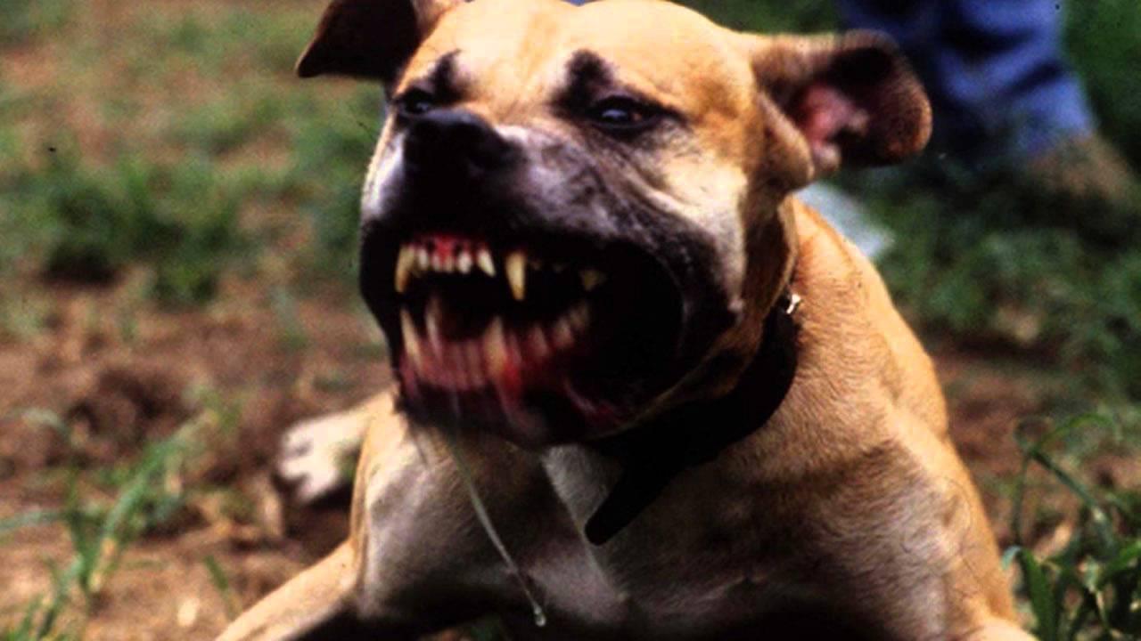 Report Dog Barking