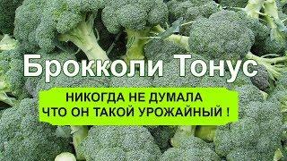 Брокколи Тонус супер  урожайная , и устойчива к цветности!